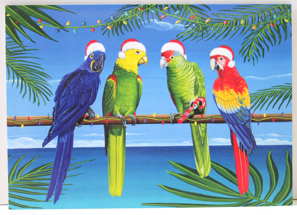Image result for parrots blogs christmas