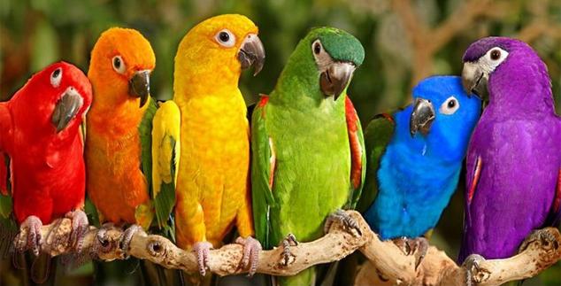 Parrot Store   Teespring